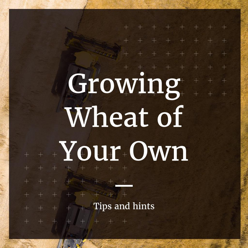 Tips and hints for growing wheat of your own poster — Modelo de projeto