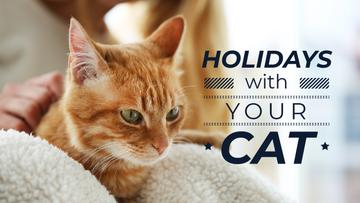Holidays with your cat