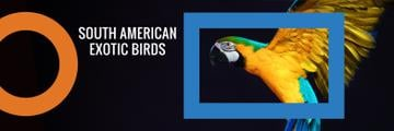 Exotic Birds Shop Ad Flying Parrot | Twitter Header Template