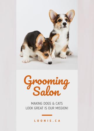 Grooming Salon Ad Cute Corgi Puppies Flayer – шаблон для дизайна