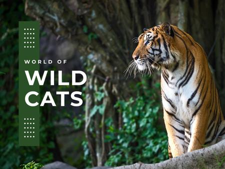 Wild cats Facts with Tiger Presentation Modelo de Design