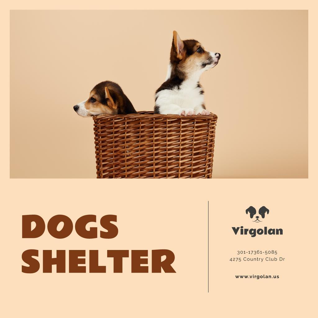 Pet Shelter Promotion Puppies in Basket Instagram ADデザインテンプレート
