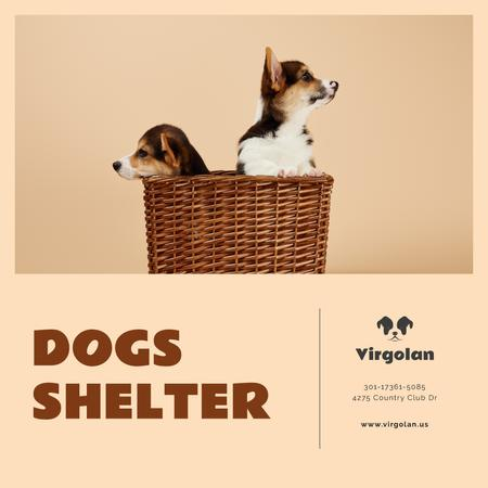 Pet Shelter Promotion Puppies in Basket Instagram AD Tasarım Şablonu