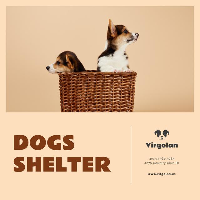 Modèle de visuel Pet Shelter Promotion Puppies in Basket - Instagram AD