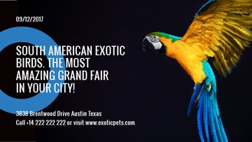 Exotic Birds fair Blue Macaw Parrot