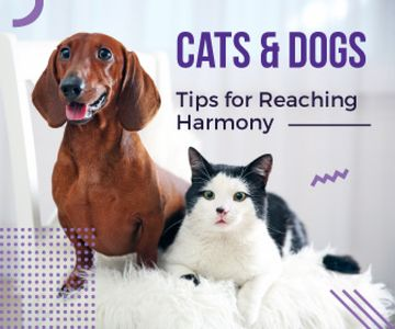 Tips for reaching harmony between cat and dog poster