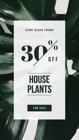 Black Friday Ad Green plant leaves Instagram Story – шаблон для дизайну