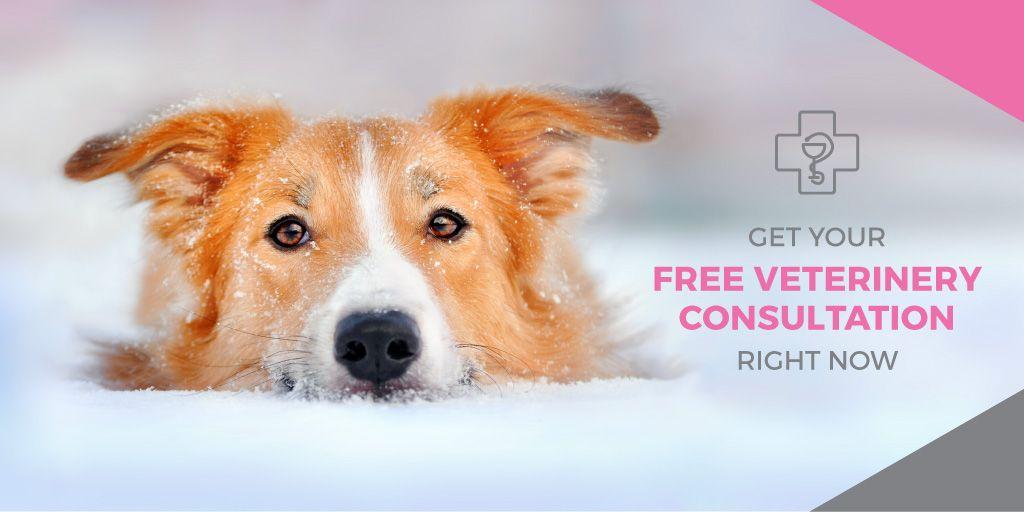 Free veterinary consultation — Створити дизайн