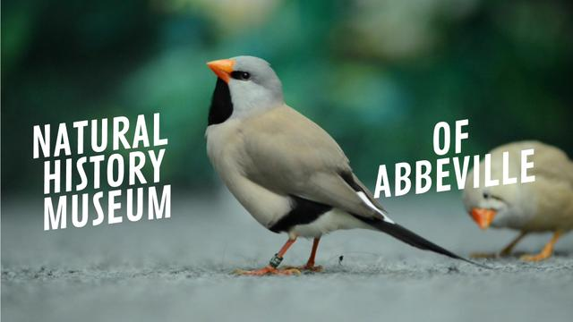 Designvorlage Cute shaft tailed finch birds für Full HD video