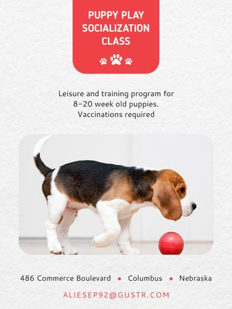Puppy socialization class with Dog Poster US – шаблон для дизайну