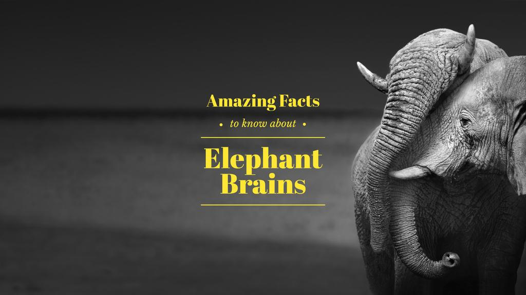 Amazing facts about elephant brains — Modelo de projeto