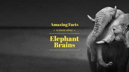 Plantilla de diseño de Facts about elephants Presentation Wide
