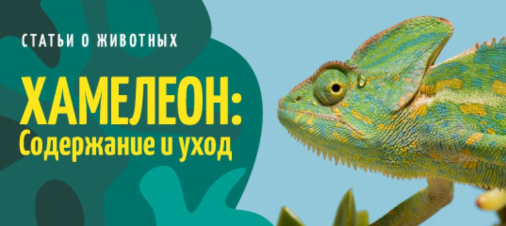 Exotic Pets Guide Green Chameleon | VK Post with Button Template — Создать дизайн