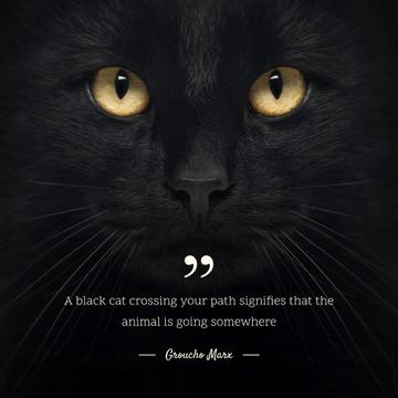 Citation about a black cat