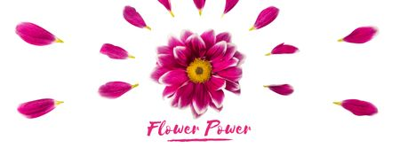 Purple daisy flower with petals Facebook Video cover Modelo de Design