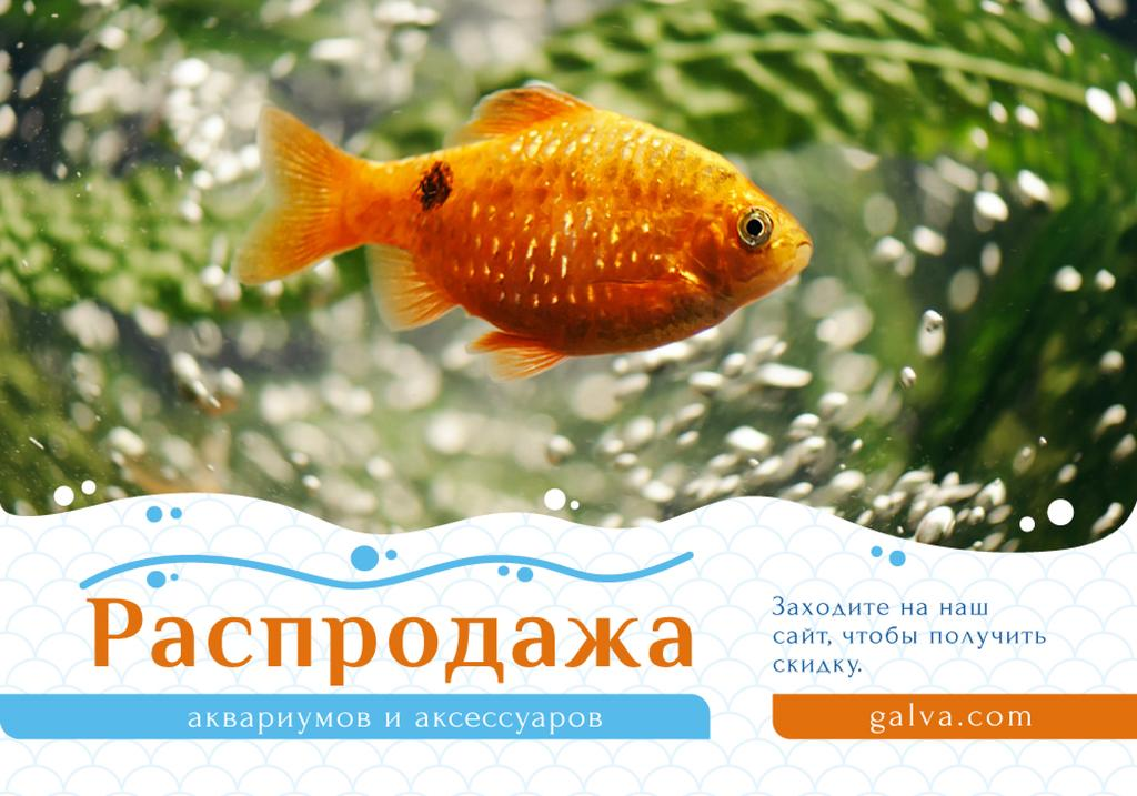 Pet Shop Offer with Fish Swimming in Aquarium — ein Design erstellen