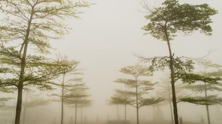 Plantilla de diseño de Foggy Forest Trees Zoom Background