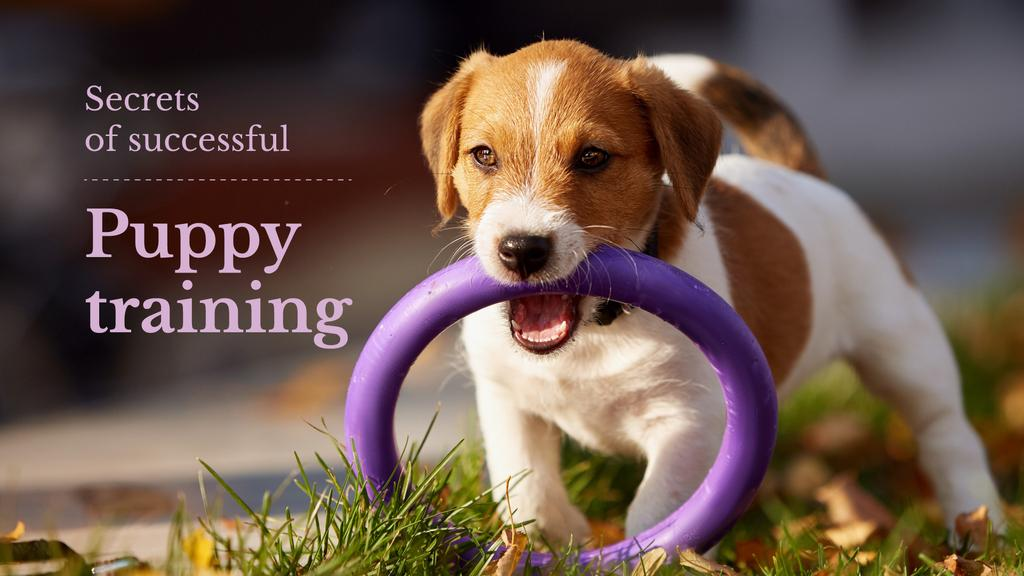 secrets of successful puppy training — ein Design erstellen
