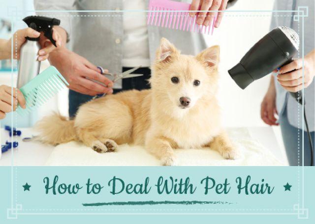 Pet salon offer with Cute Puppy Card Modelo de Design