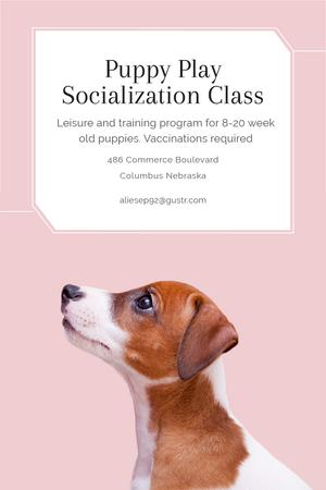 Puppy play socialization class Pinterestデザインテンプレート