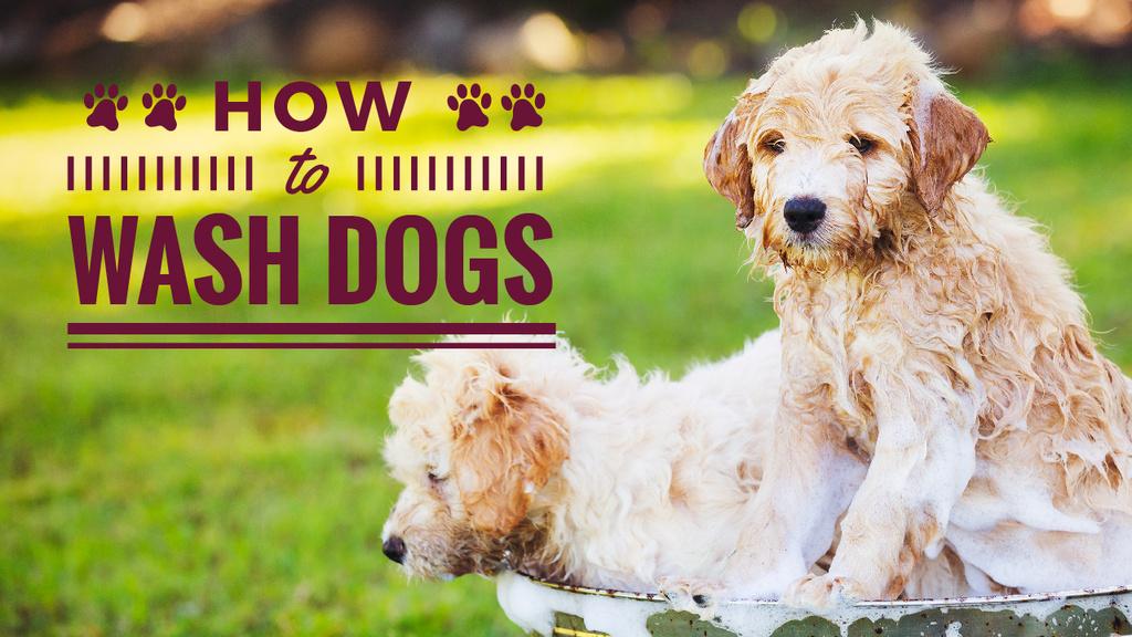 Washing Dogs Tips Two Cute Puppies in Foam — Modelo de projeto