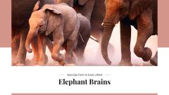 Facts about elephants Ad