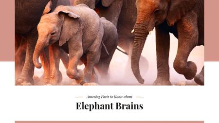 Plantilla de diseño de Facts about elephants Ad Presentation Wide
