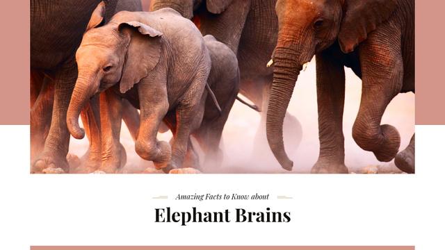 Ontwerpsjabloon van Presentation Wide van Facts about elephants Ad