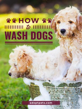 Washing Dog Cute Puppies in Foam Poster US – шаблон для дизайна