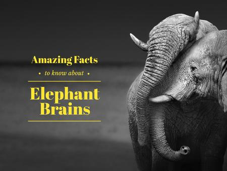 Plantilla de diseño de Facts about elephant brains Presentation