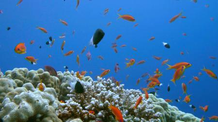 Plantilla de diseño de Beautiful Corals and Fish in the Sea Zoom Background