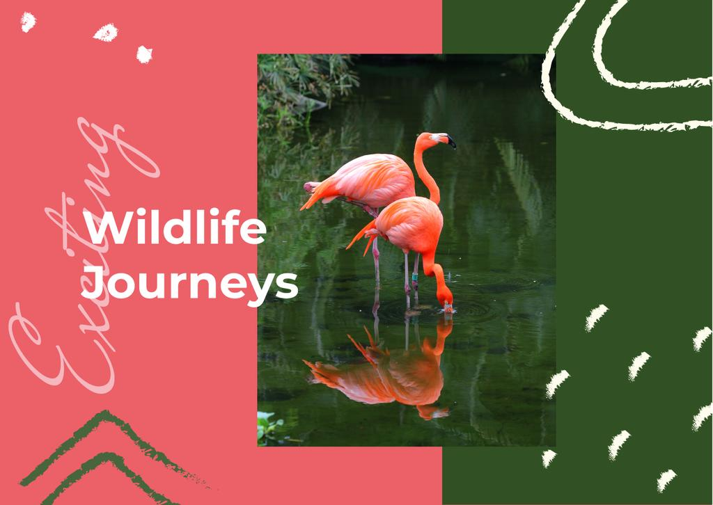 Pink flamingos in water — Create a Design