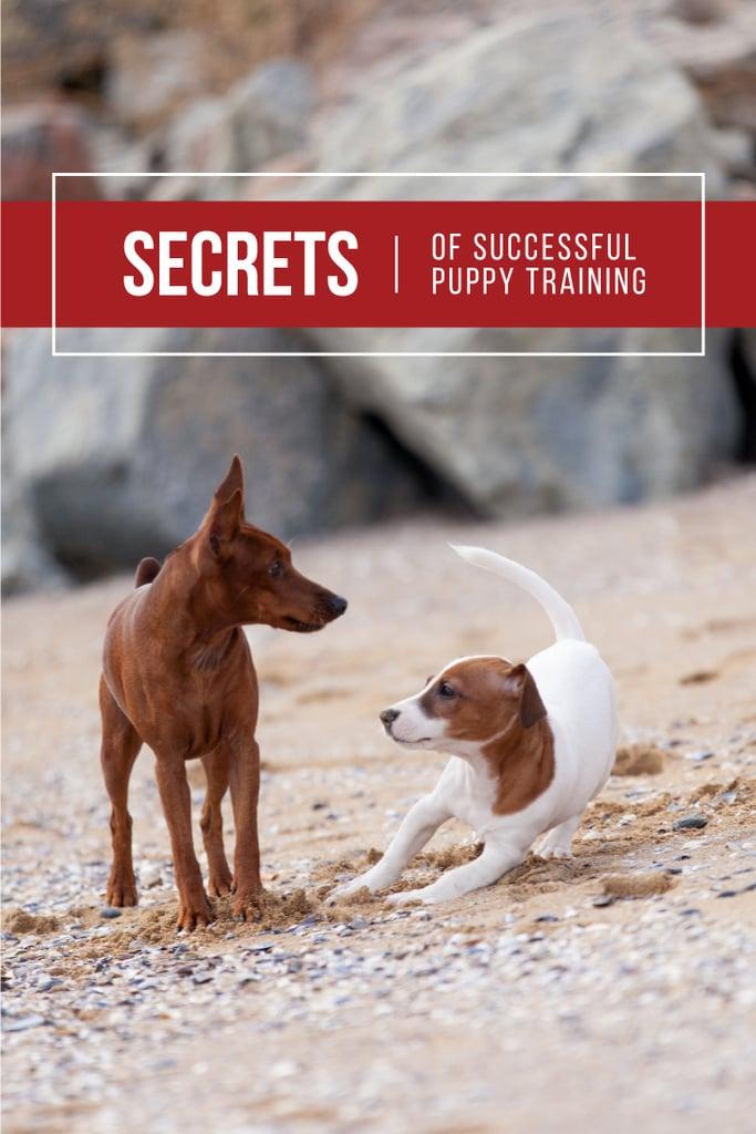 Secrets of puppy training — Create a Design