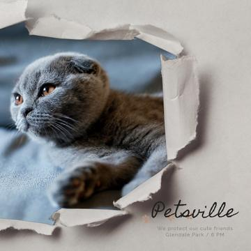 Pet Care Scottish Fold Cat in Torn Paper Frame | Square Video Template