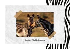 Wild zebras in nature