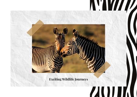 Plantilla de diseño de Wild zebras in nature Postcard