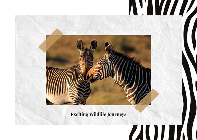 Modèle de visuel Wild zebras in nature - Postcard