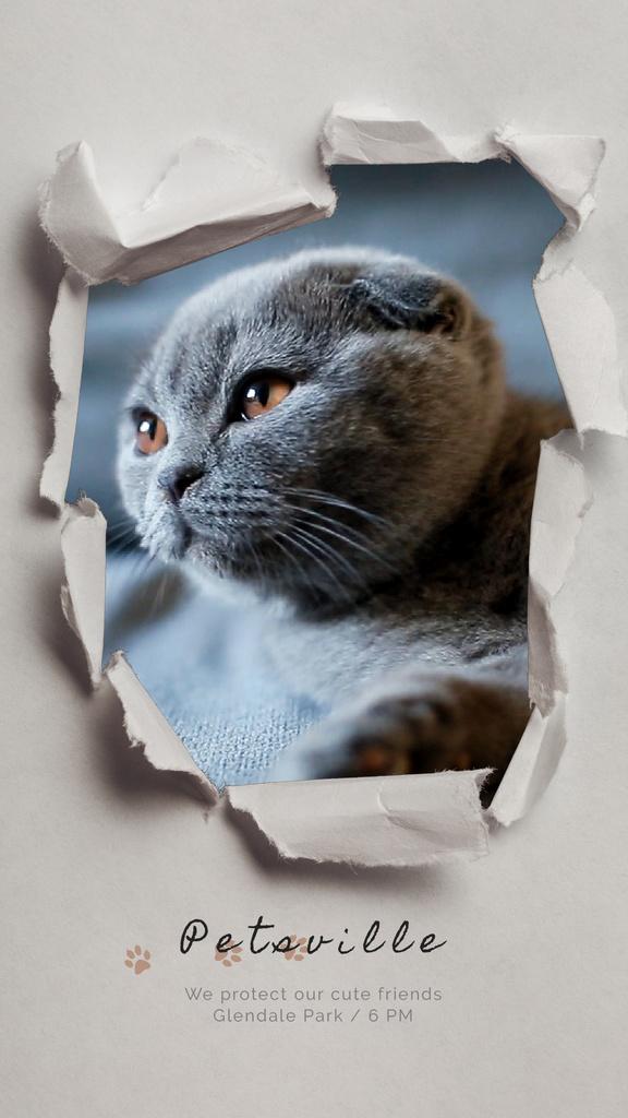 Pet Care Scottish Fold Cat in Torn Paper Frame | Vertical Video Template — Crea un design