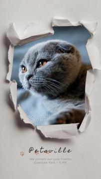 Pet Care Scottish Fold Cat in Torn Paper Frame | Vertical Video Template