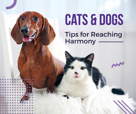 Caring About Pets with Dachshund and Cat Facebook Modelo de Design