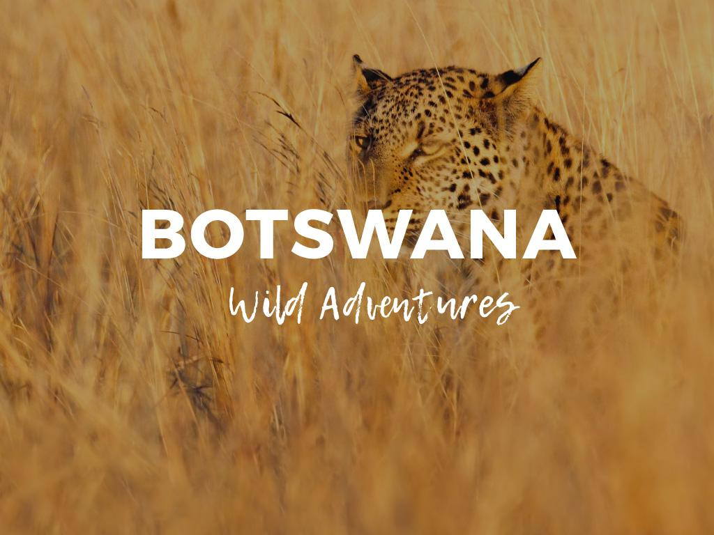 Botswana wild adventures — Create a Design
