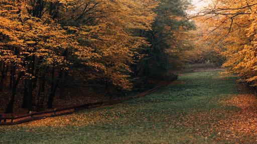 Beautiful Landscape Of Autumn Forest