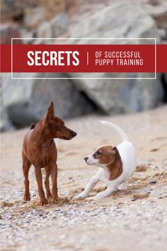 Secrets of puppy training with Cute Dogs