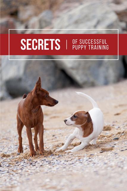 Modèle de visuel Secrets of puppy training with Cute Dogs - Pinterest