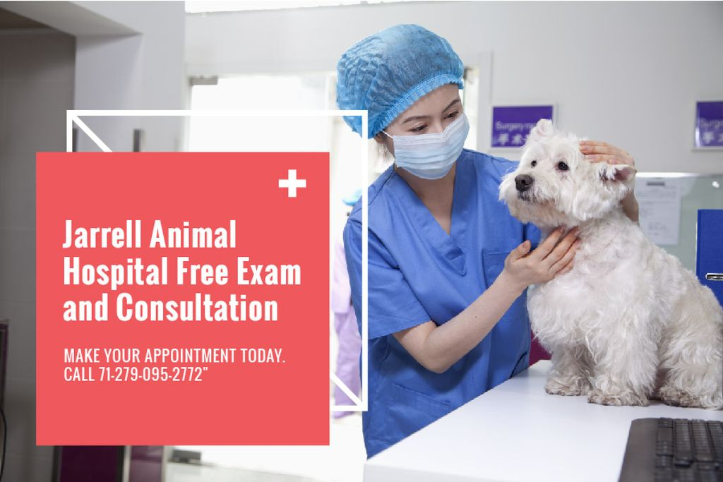 Dog in Animal Hospital — Modelo de projeto