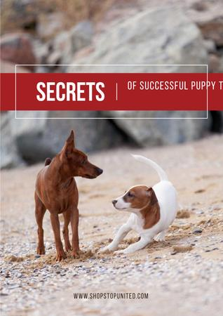 Plantilla de diseño de Secrets of puppy training Poster