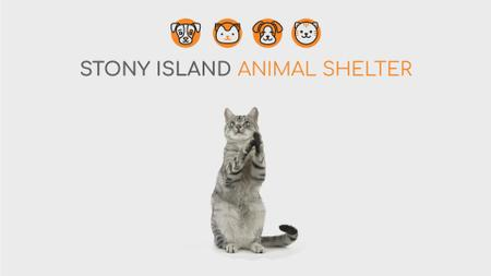 Ontwerpsjabloon van Full HD video van Animal Shelter Ad Cute Grey Cat Playing