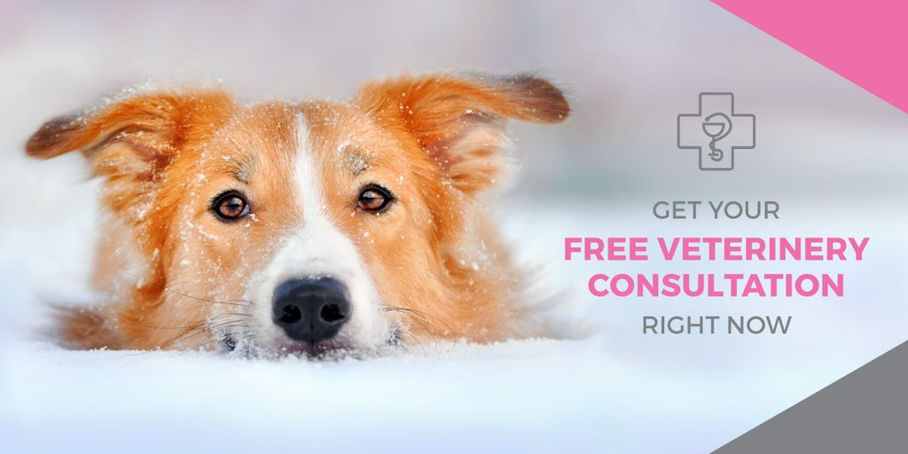 Free veterinary consultation banner — Створити дизайн