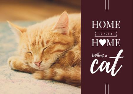 Plantilla de diseño de Cute Сat sleeping at Home Postcard