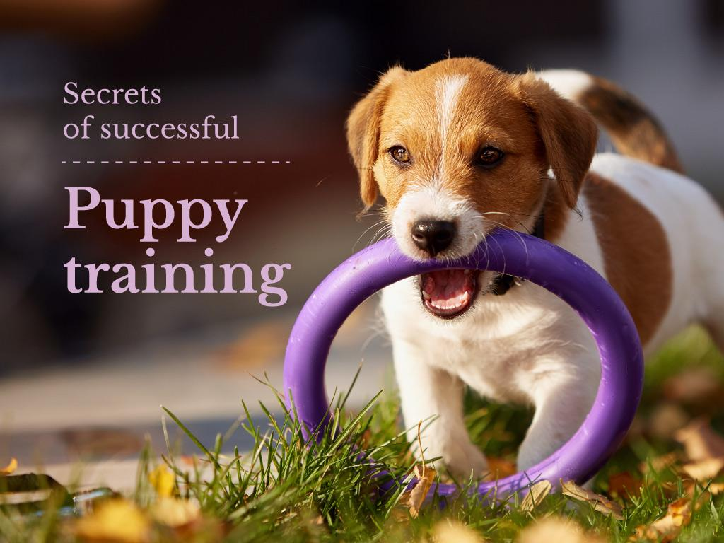 Secrets of successful puppy training — Create a Design